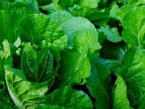 Produce seedlings