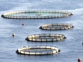 Fish farm. Photo: OSU Extension