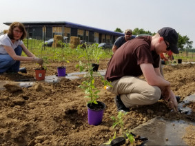 Master Gardener Volunteer Amy Chenevy shows veteran Jeff Smallwood how to transplant tomatoes in the Heroes Garden. Photo: Mike Hogan.