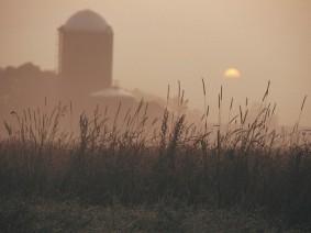 Wheat field. Photo: Thinkstock.