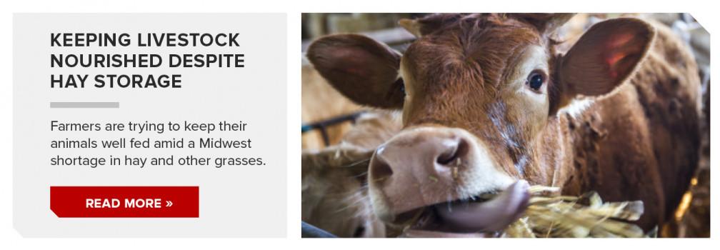 Keeping livestock nourished despite hay shortage.