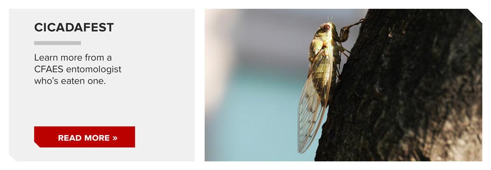 Cicadafest
