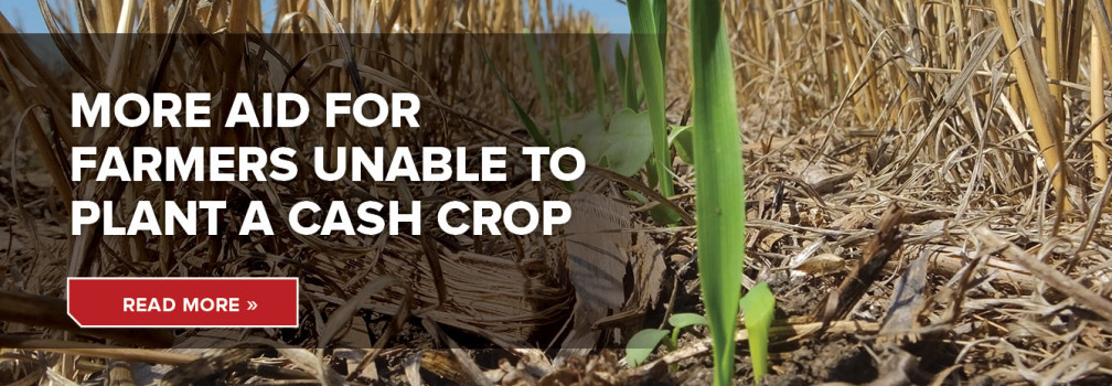 More aid for farmers unable to plant a cash crop.