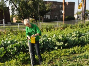 Mary Gardiner has studied vacant lots and biodiversity in Cleveland since 2009. (Photo by Ken Chamberlain)