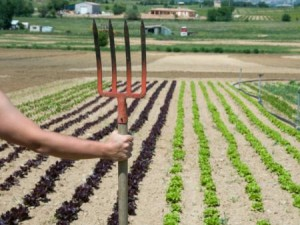 stock image, person with pitchfork in front of vegetable row crops
