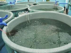 Aquaculture farm. Photo: Thinkstock