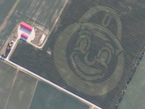 Brutus Buckeye in drone field