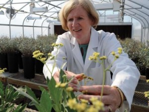 Researcher Katrina Cornish in the greenhouse with guayule plant.