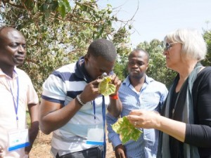Miller in Senegal conducting training on disease identification. (Photo by Miriam Rich)