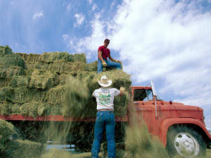 Farmers who focus on managing the work environment for their staff in a way that offers flexibility and empathy can raise productivity and cut down on turnover, according to an expert with Ohio State University Extension.