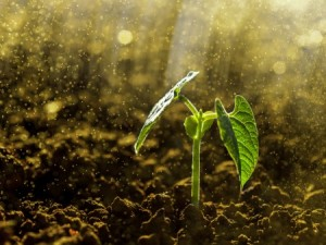 The Conservation Tillage and Technology Conference March 6-7 will include talks on building healthy soil while reducing fertilizer runoff. (Photo: Thinkstock)
