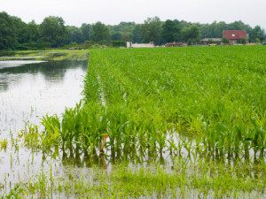 Extreme rain events are far more common in Ohio now, part of the climate changes that are occuring, according to an Ohio State University climate expert. Photo: Thinkstock