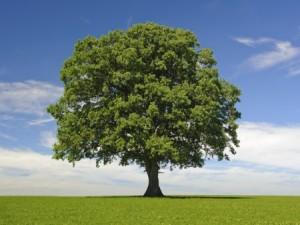 School for Trees