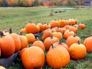 Aug. 17 Pumpkin Field Day will offer updates regarding disease management, insect management, weed control, and new pumpkin and winter squash varieties. Photo: Thinkstock