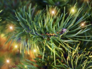 12 Days of Experts: 9 Tips for Keeping a Christmas Tree Fresh, 4 Trees You Should Know ...