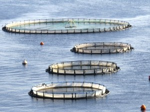 Fish farm. Photo: OSU Extension