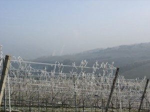 Frozen vineyard. Photo:Thinkstock,