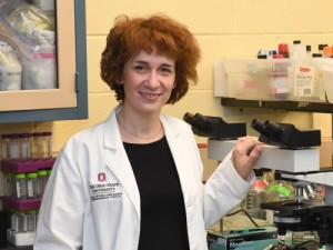 (Anastasia Vlasova did the genetic analysis of a newly discovered coronavirus. Photo: Ken Chamberlain, CFAES)