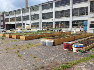 Several raised beds in an industrial parking lot as part of the Urban Renewal Farm in Dayton, Ohio. OSU Extension provided funding for the soil and the materials to create the raised beds. Photo: Jim Jasinski, OSU Extension.
