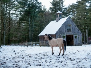 Horse standing in snow outside barn.