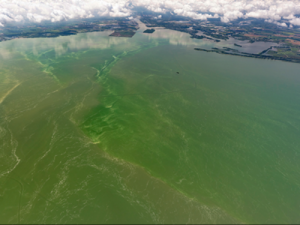 Algal bloom photo
