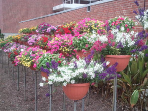 A wide selection of annuals will be available at the Spring Plant Sale.