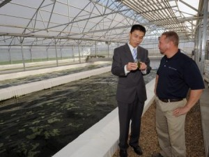 OARDC's Yebo Li (left) and Touchstone's Doug Amie check a water sample from one of the indoor ponds growing algae in Wooster. (Photo by Ken Chamberlain)