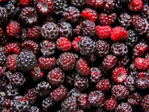 Ohio State researchers are taking black raspberries and making highly controlled foods, such as a nectar, and studying them in the laboratory and in humans for anticancer activity. Photo: Getty Images.