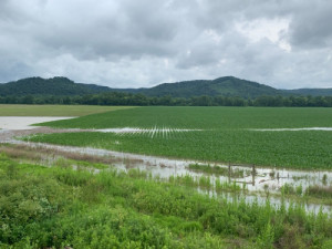 Flooded farmland in southern Ohio. Photo by Sherrie Whaley.