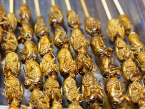Fried Cicadas on as skewer. Photo: Getty Images