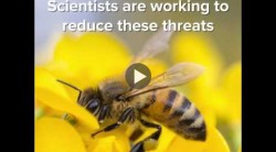 Why Bee Science Matters