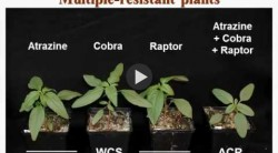 Dr. Mark Loux - Weed Management For Soybeans In 2017