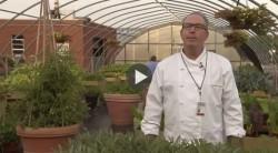 The Ohio State University Ross Heart Hospital Community Garden