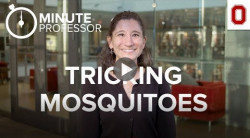 Megan Meuti: Can we trick mosquitoes into not biting us?