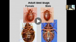 Bed bugs in Ohio - Part 1