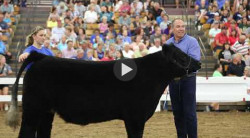 Highlights from the Dean's Charity Steer Show