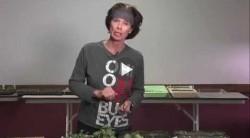 Transplanting Your Indoor Garden Seedlings: Part 3