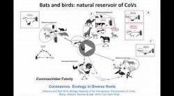 Feb. 20 Linda Saif webinar about coronaviruses